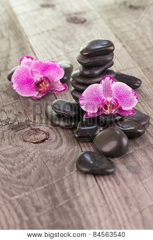 Fuchsia Moth Orchids And Black Stones