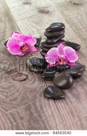 Fuchsia Moth Orchids And Black Stones