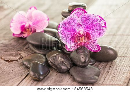 Fuchsia Moth Orchids And Black Stones On Weathered Wood