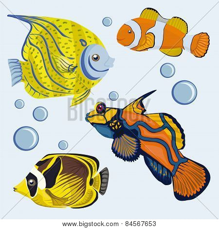 tropical fish. Colored Coral Reef Fishes.