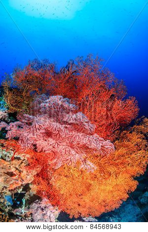 Brightly Colored Sea Fans