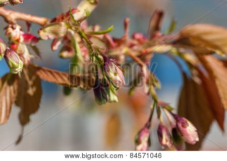 Branches of spring flowers