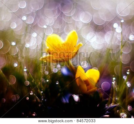 Wild Marigold Flowers Macro
