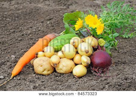 Vegetables Lie On A Bed