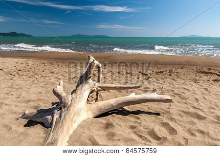 Snag on a beach
