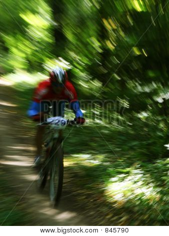 Mountain Biker In A Forrest