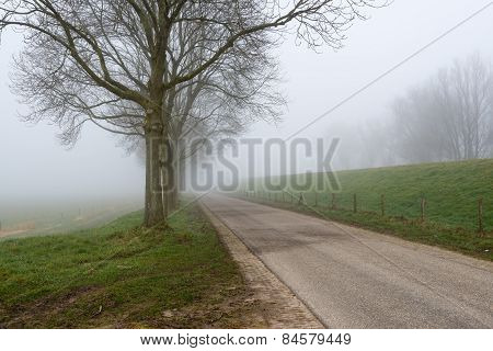 Row Of Leafless Trees Beside A Country Road