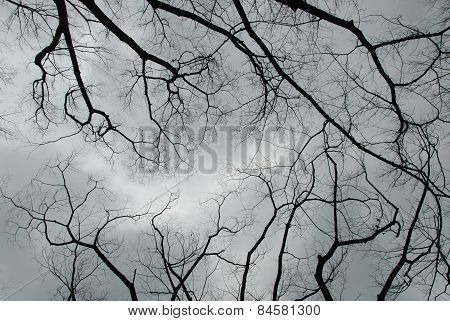 Leafless Branches With Cloudy Sky