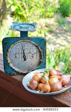 Retro Weight And A Plate Of Onion