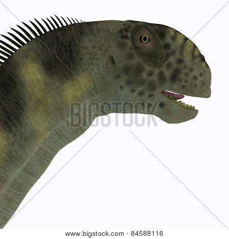 Camarasaurus Head