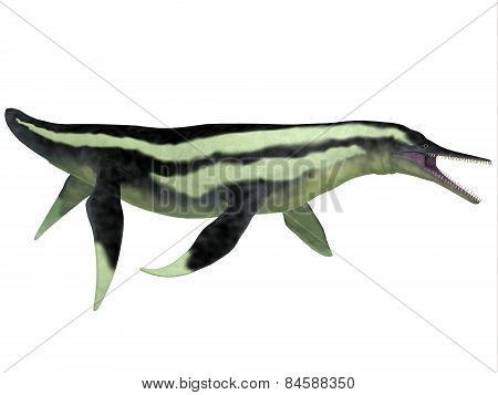Dolichorhynchops Plesiosaur On White
