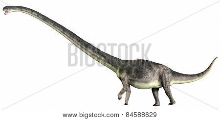 Omeisaurus On White