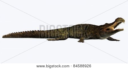 Sarcosuchus On White