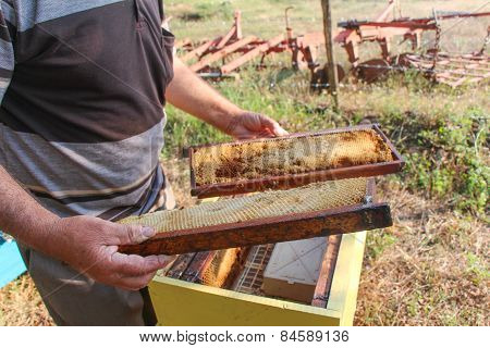 Beekeeper holding a frame of honeycomb.