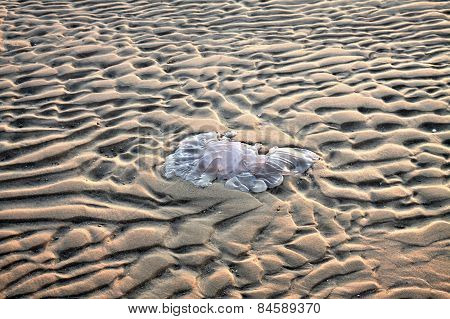 Jellyfish In The Sand