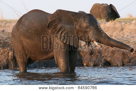 Isolated Elephant in a waterhole in Namibia