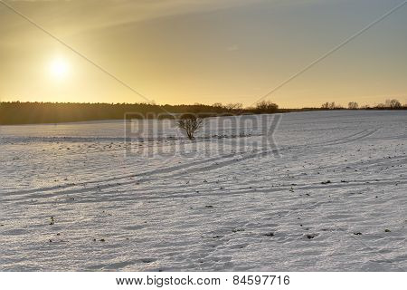 Warm Winter Landscape