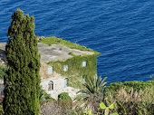 pic of climber plant  - Solitary house on the sea covered by climbers  - JPG