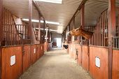 foto of stable horse  - Head of horse looking over the stable doors - JPG
