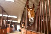 stock photo of stable horse  - Head of horse looking over the stable doors - JPG