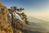 image of mountain-high  - Wild pine in the high mountains of the Crimea - JPG