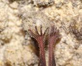 stock photo of bat  - Legs of a bat. Macro shoot. Lesser Horseshoe Bat (Rhinolophus hipposideros) ** Note: Shallow depth of field - JPG