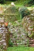 pic of naturel  - Moss covered steps in Saint Circ Lapopie - JPG