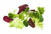 pic of escarole  - Fresh green and purple lettuce - JPG