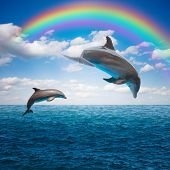 picture of bottlenose dolphin  - couple of jumping dolphins,beautiful seascape with rainbow in deep  ocean  waters and cloudscape