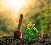 image of strawberry plant  - flowers plant and gardening tool agaisnt beautiful sunlight in green park use for people activities and growing tree in plantation field - JPG