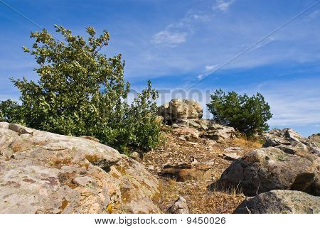 Boulders And Trees On The Hillside