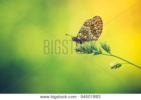 Vintage Photo Of Beautiful Butterfly Sitting On Plant.