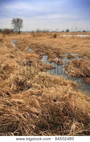 Flood-meadow At Winter