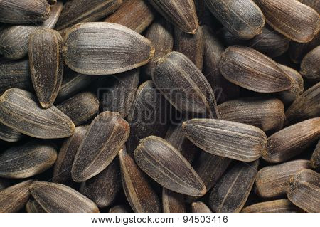 Sunflower Seeds (with Hull)