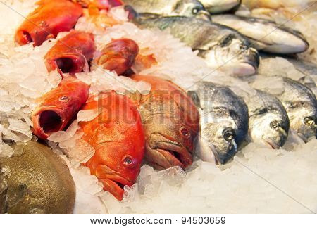 Fresh fish on Ice