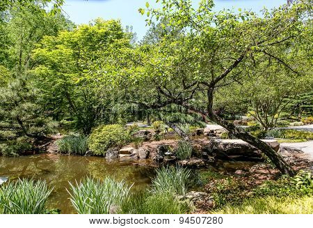 Trees Around Garden Pond