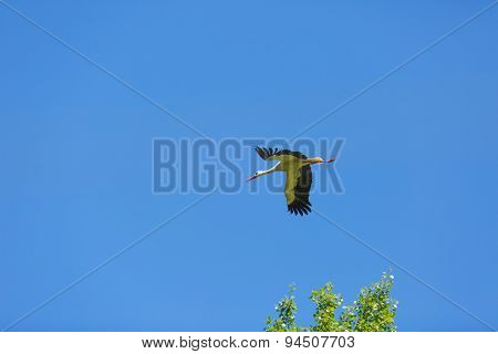 Stork Flying On Blue Sky Background