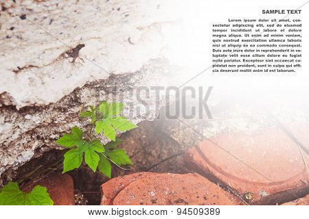 Plant growing out from cracked construction, concept of persevere, beginning,obstacle