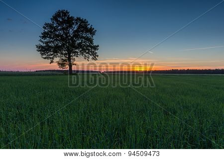 Beautiful Young Green Field And Old Tree