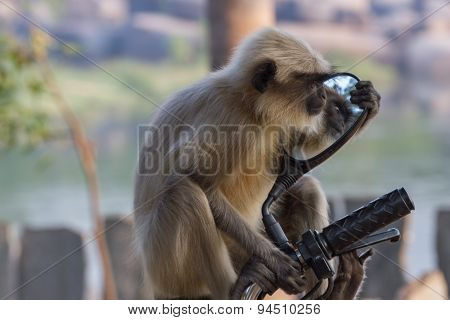 Long-tailed monkey gazing in the mirror of moped.