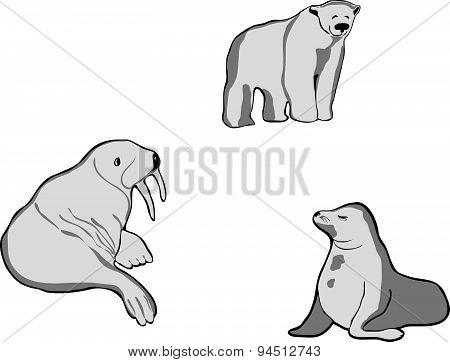 Nothern animals