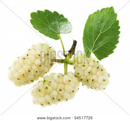 White Mulberries On The White Background