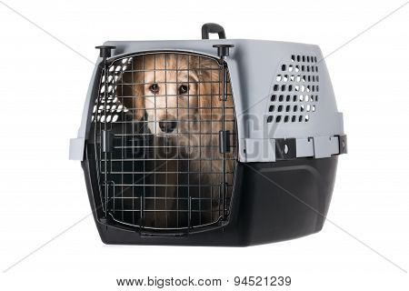 Dog In Pet Carrier Isolated On White Background