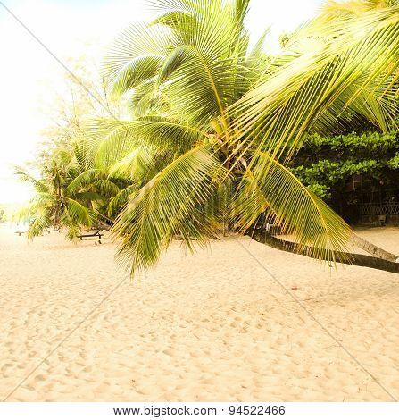 Tropical palmtree