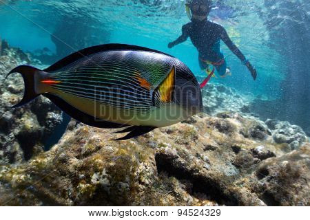 Lady watching bright colorful tropical fish in the tropical sea