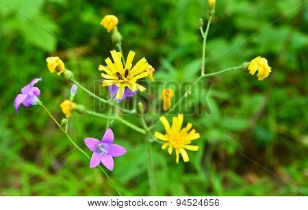 The Flowers Are Bluebells And Buttercups.