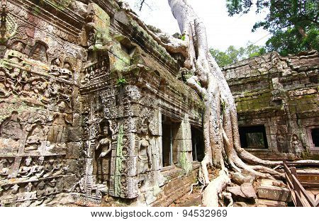 Ta Prohm temple is UNESCO's world heritage in Siem Reap, Cambodia