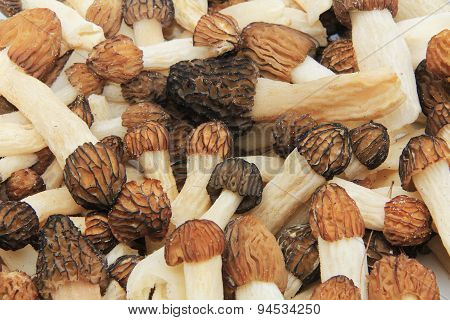 Close-up of a Bunch of Wild Morel Mushrooms