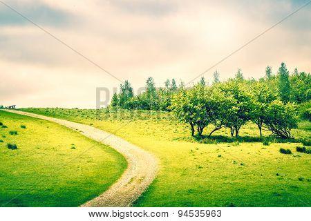 Path On A Green Field