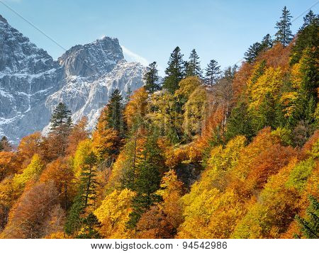 Autumnal deciduous forest in the Tyrolean mountains